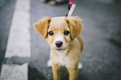 Doggy.