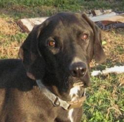 Meet Freddie in Petfinder's Adopt-A-Less-Adoptable-Pet Week Gallery. Look at those eyes!