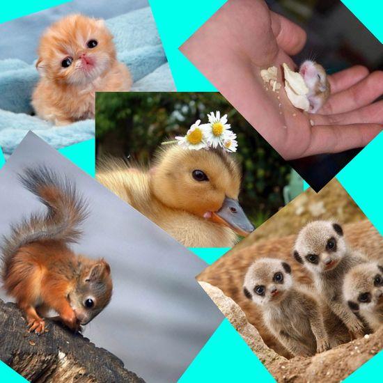 Cute baby animals!
