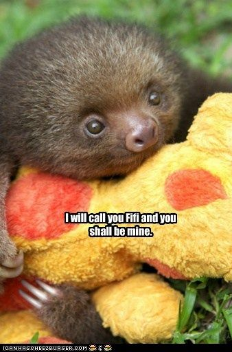 !! baby sloth ?