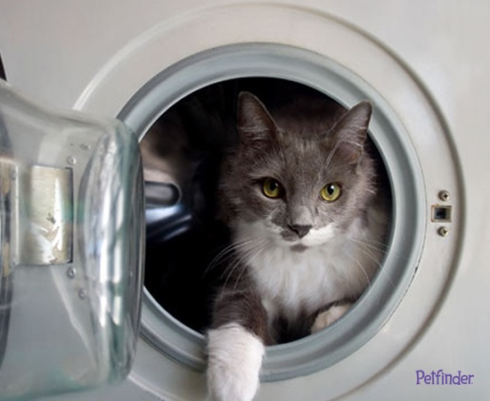 Protect your cat from these 7 common deadly dangers!  Repin to keep cats safe!