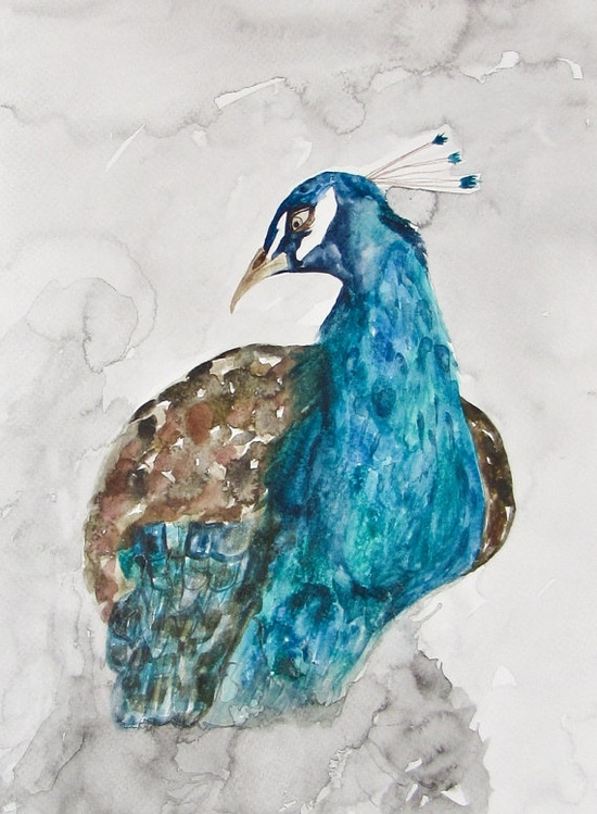 love this peacock watercolor by etsy seller sstormster1