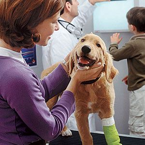 Save money at the veterinarian: How to cut costs without compromising your pet's health