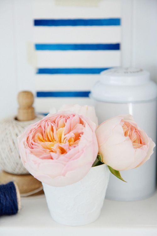 pale pink pops against blue stripes