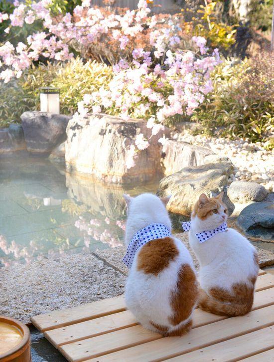Cat Love Cat