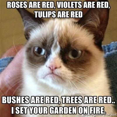 Grumpy cat cracks me up.