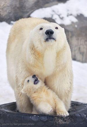Polar Bear & Cub on the endangered list.