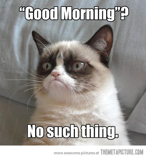 I'm not a fan of mornings either, grumpy cat.