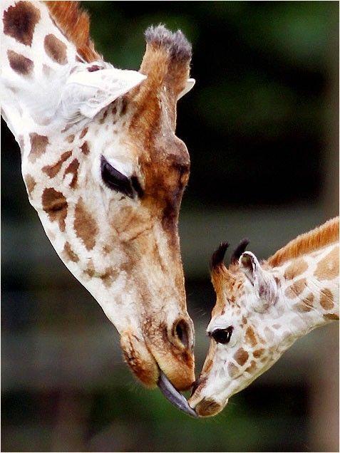 Cute Baby Animals -