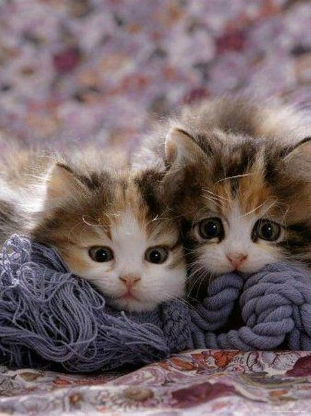 I love kittens~ oh just look at those cute faces! one is ready to pounce and one looks worried!