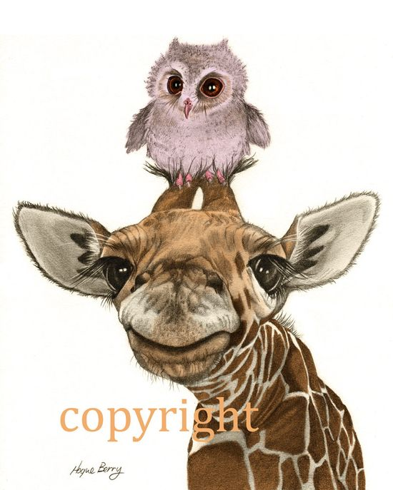 Baby Giraffe Baby Owl Pencil Drawing Colored by TheBerryPress