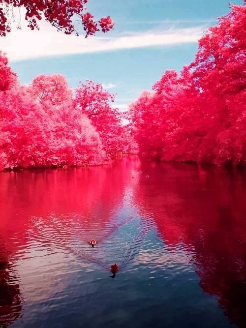Cherry River, West Virginia. Oh my goodness that is gorgeous.