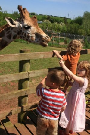 Get close to giraffes at South Lakes Wild Animal Park
