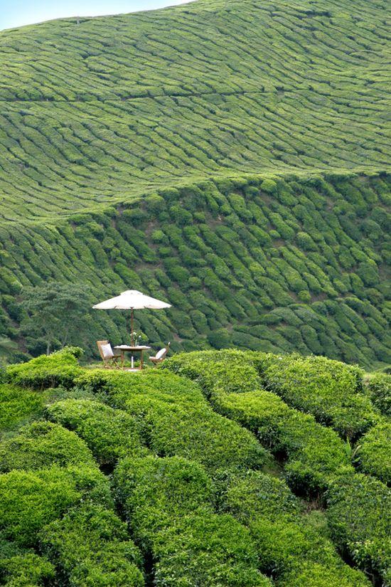 Dream Picnic: Cameron Highlands Resort In Pahang, Malaysia - Luxury Tea Plantation Hotel