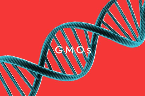 What you really need to know about genetically modified foods