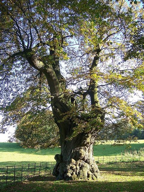 Stourhead, Wiltshire