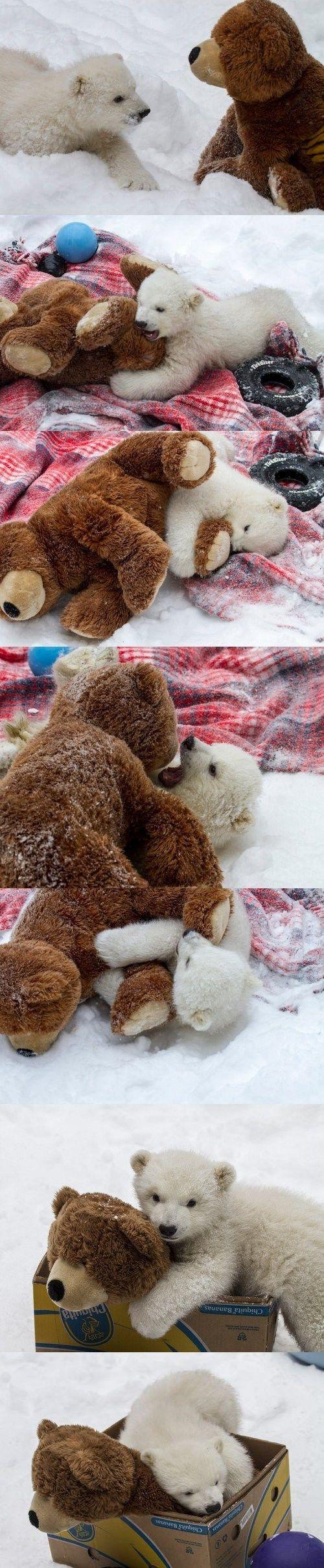 baby polar bear meets a friend.