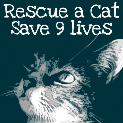 Rescue a #Cat