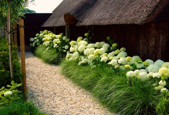 Hydrangea and fountain grass hedge. Gorgeous tropical garden. Love the thatched roof