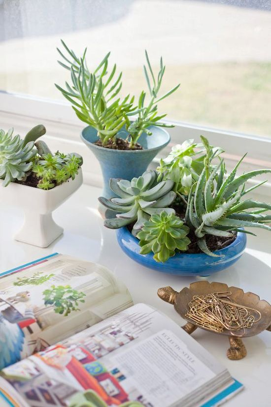 DECORATE shown here with succulents photographed by interiors guru Emily Henderson from HGTV (major girl crush)