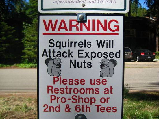 Squirrels...