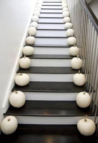 white pumpkins lining path