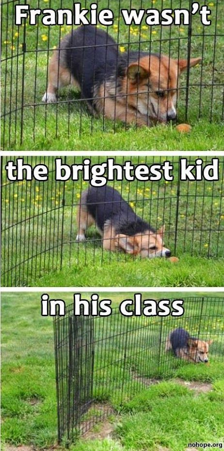 Hehe just like my dog!
