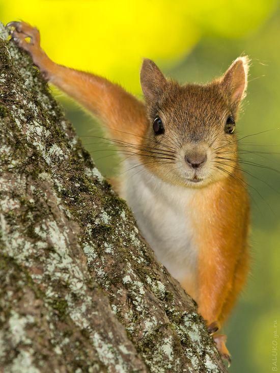 LLBwwb, Nature and Animals :): Photo