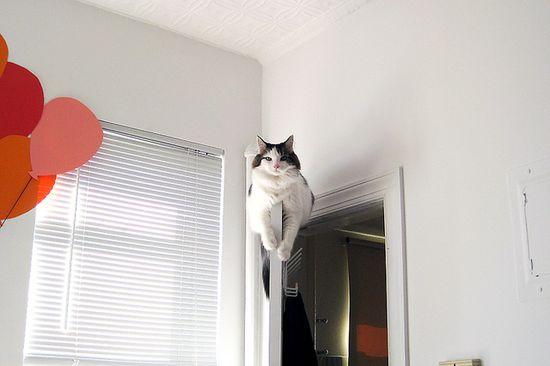 LOL ... cat
