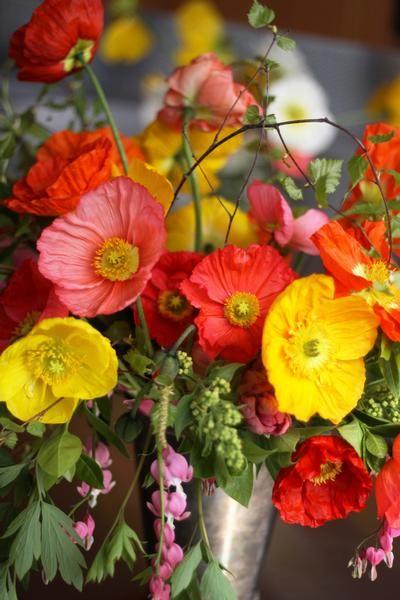 Florals by McKenzie Powell