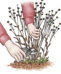 Late winter/early spring checklist for prepping the gardens