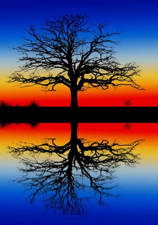 A single tree, twice!