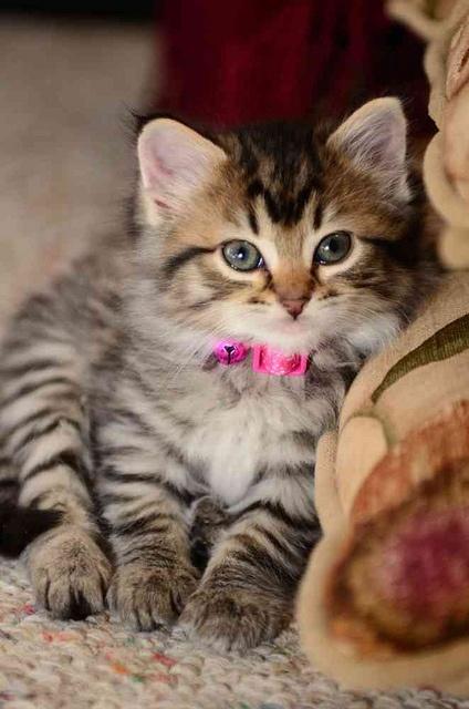 Yep I'm adorable!!!!!