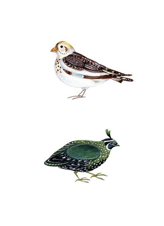 tracey long bird illustration