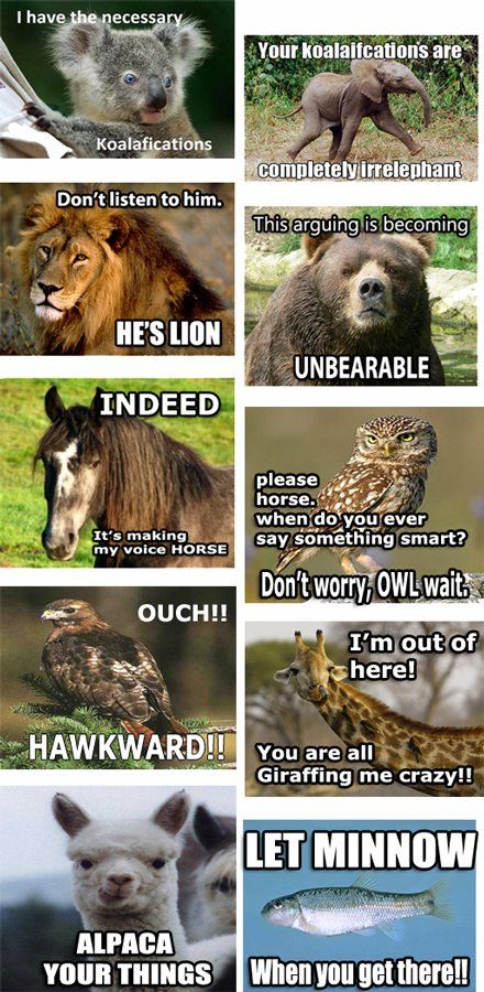 All of the animals