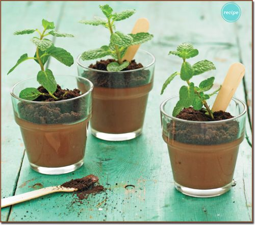 Chocolate pudding plants