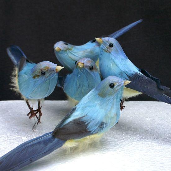 .cinderella blue birds