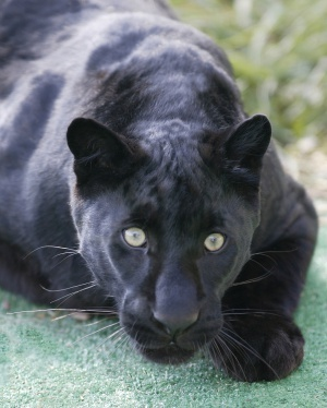 The Wild Animal Sanctuary  Colorado