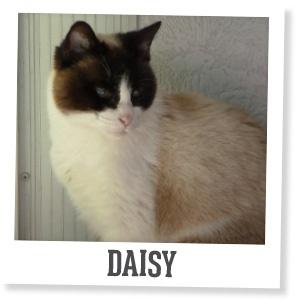 Smart Furniture Pets: Daisy