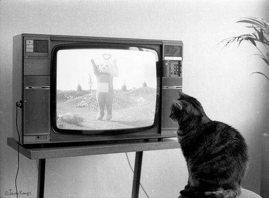 "Moggierocket: ""When Moppie was 3 and 4 years old, she would like to watch Teletubbies..."""