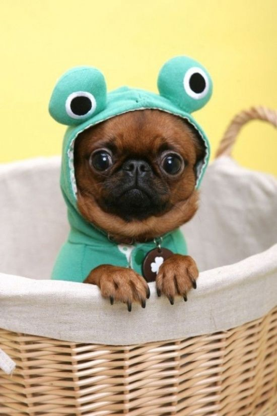 Am I a dog, or a frog?