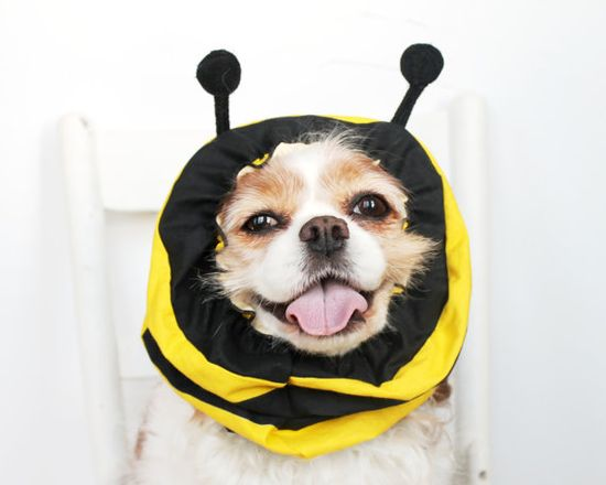 happy bumblebee dog!