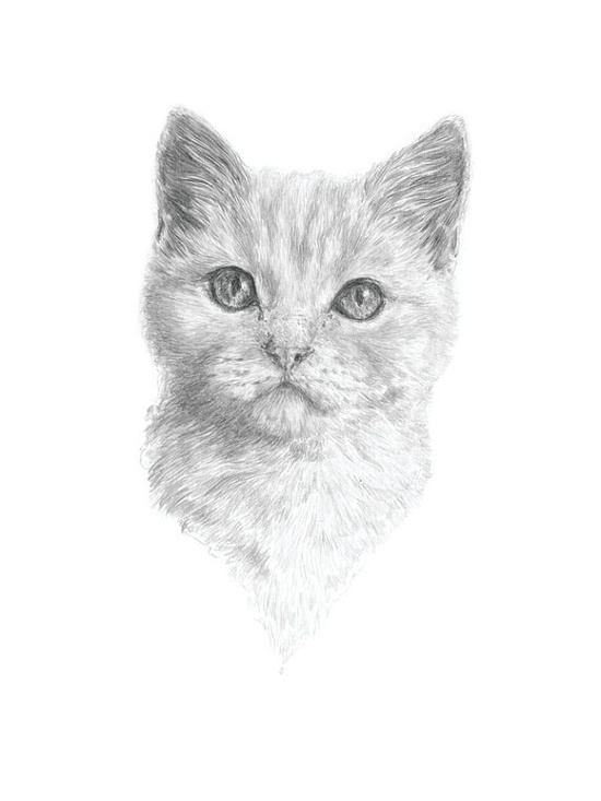 custom pet portrait illustration by commission.  Something I'd love to do for my Buddy-Lou.