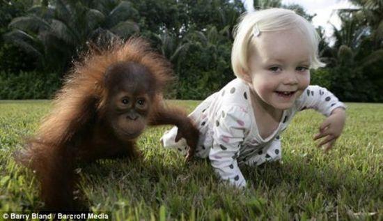 baby orangutang with pet girl