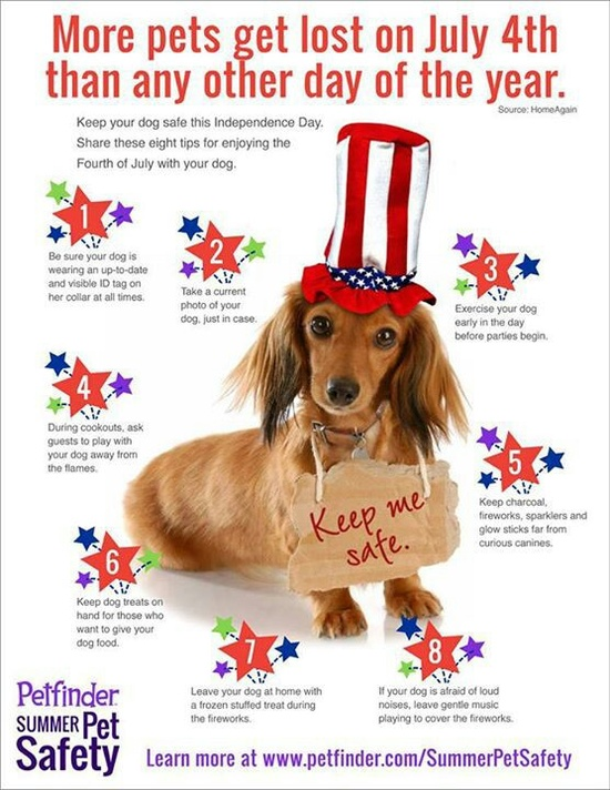 Safety tips for your pet on the Fourth of July. Important!     #WildwoodAcres #TampaApartments #PetFriendly #FencedBackyards