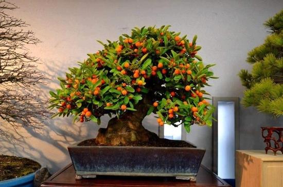 Bonsai. Arte Bonsai (Facebook)