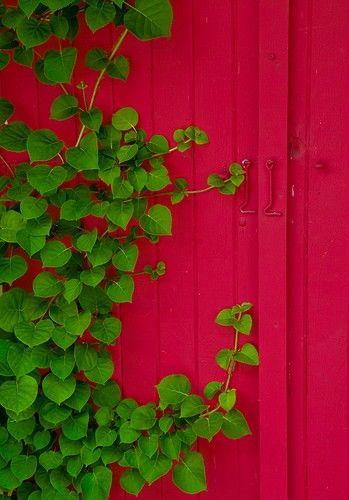 Dark pink & green :)