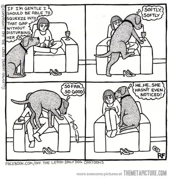 Every dog ever…