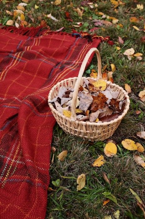 fall picnics