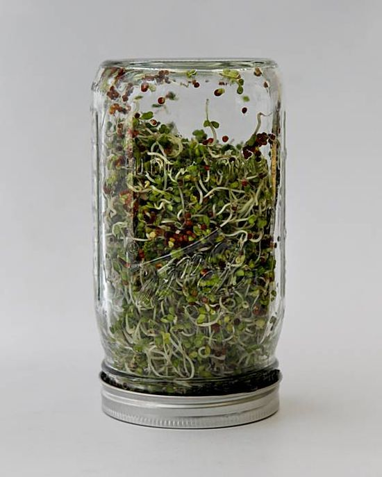 How to Grow Sprouts: Seeds to sprouts in about 5 days for your urban salad!